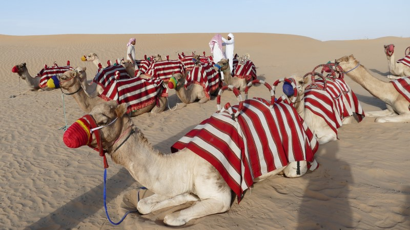 Dubai Desert Safari - Ankur P
