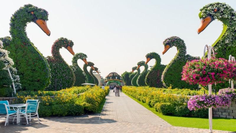 Dubai Miracle Garden - John Watson