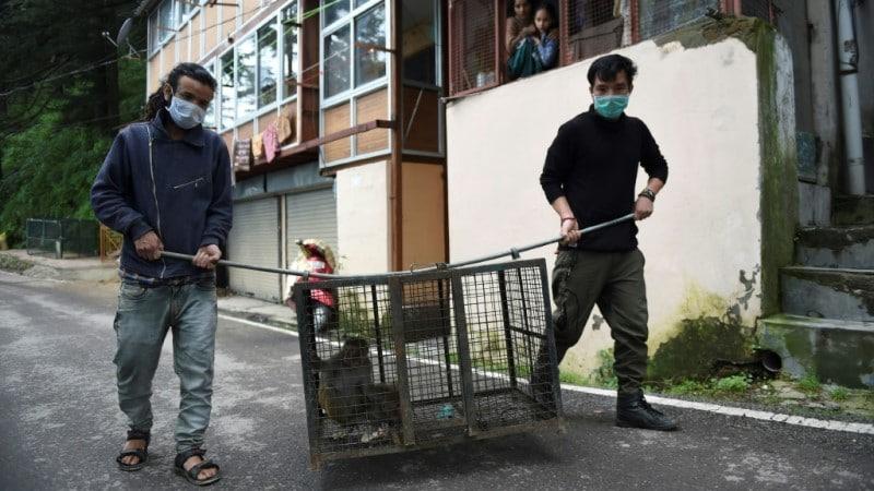 Efforts to Control Monkeys