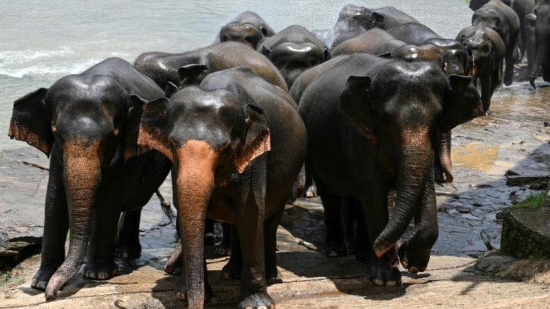 Elephant Population in Decline