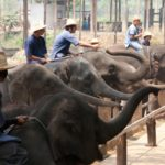 Animal Tourism in Asia: Abused for Cheap Tricks