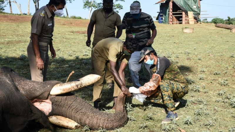 Elephants Tested for Covid-19