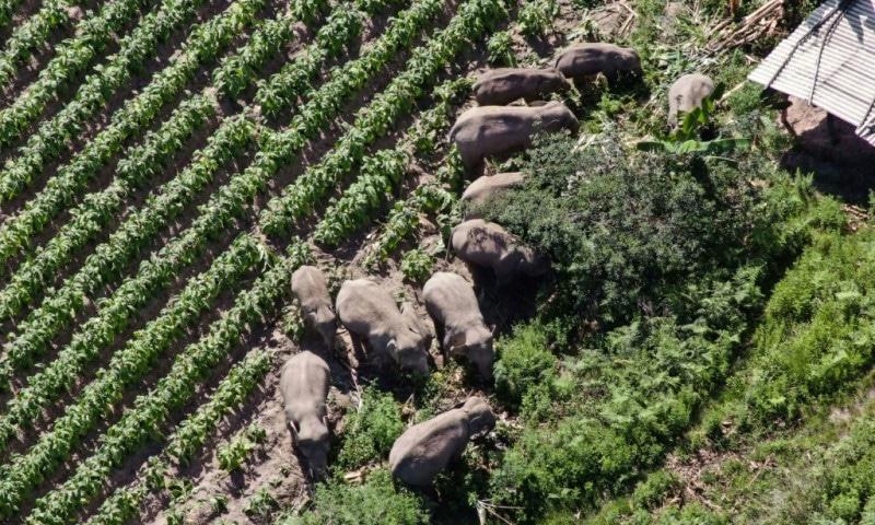Elephants Trek