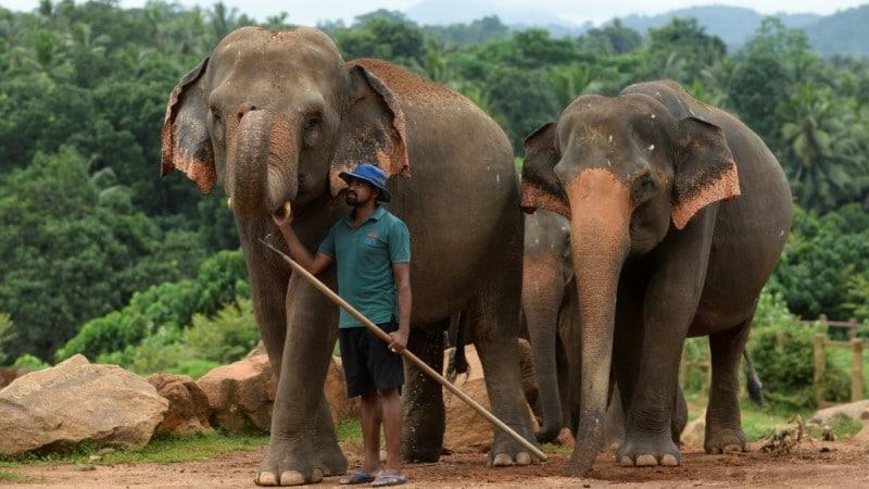 Elephants and Humans