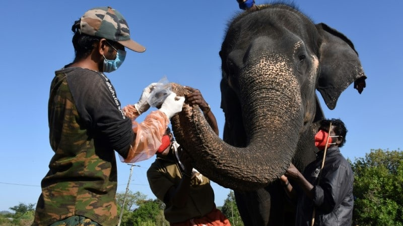 Elephants in Southern India