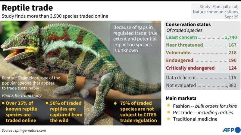 Endangered Reptiles Trade