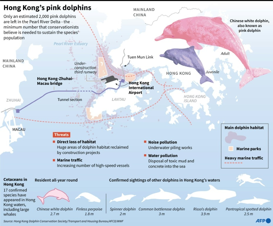 Factfile on Hong Kong's Pink Dolphins