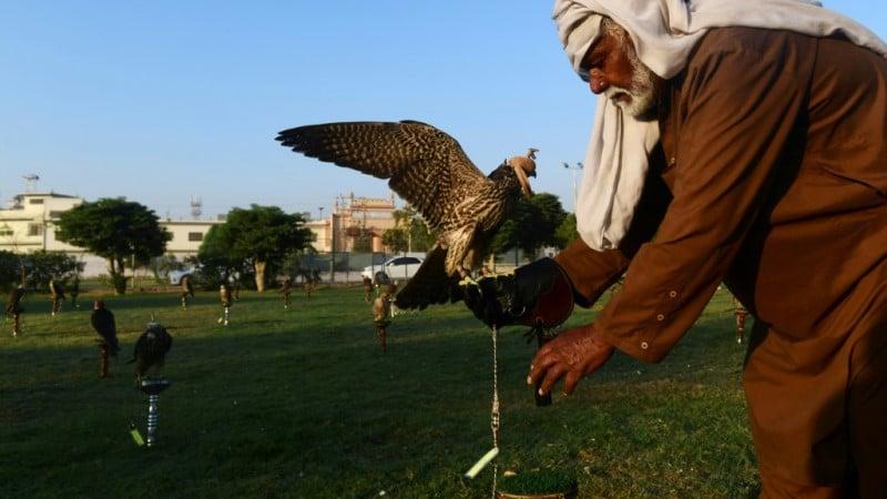 Falcon Trapping Market