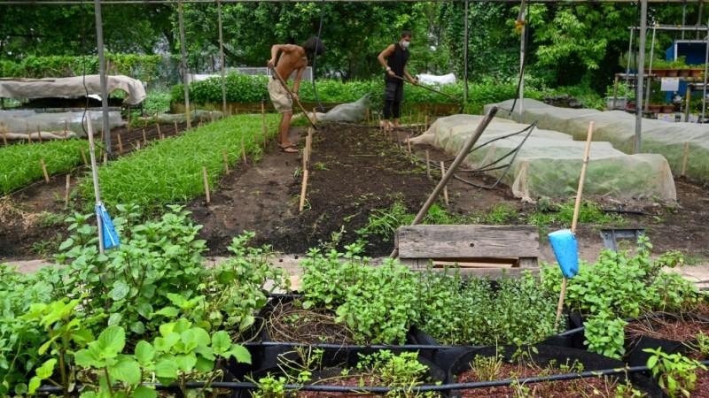 Farming Gardens in Unusual Places