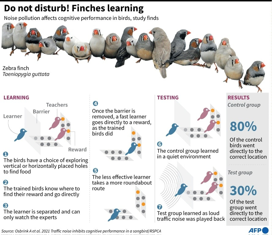 Finches Learning