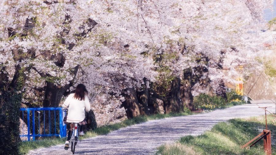 Fukushima Perfecture - 郡山 Koriyama