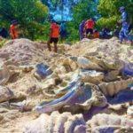 Giant Clam Shells Worth $24.8 Million Seized in Philippine Raid