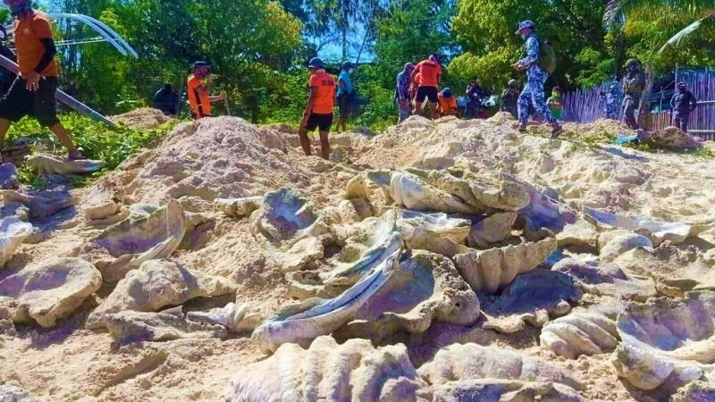 Giant Clam Shells