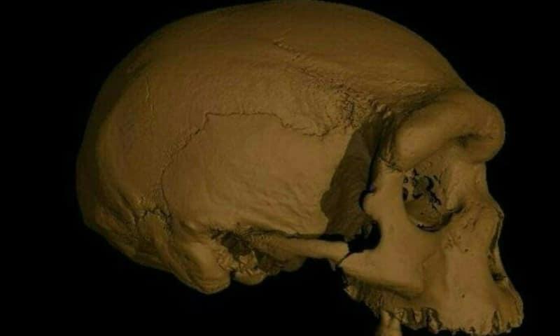Harbin Cranium Virtual Reconstruction