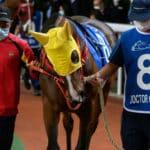 Hong Kong Horse Racing Continues Behind Closed Doors Amid Virus