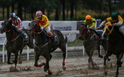 Beating the Odds, Wuhan Horse Racing Gallops Beyond Virus
