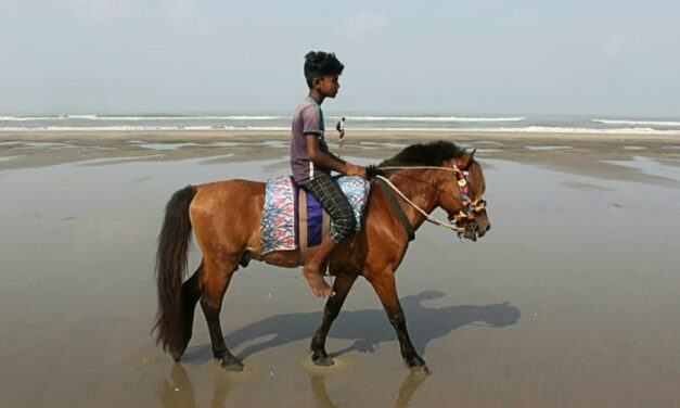 Horses Starve to Death as Pandemic Hits Bangladesh Tourism