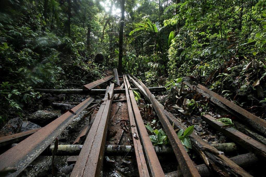 Illegal Logging Site on Palawan