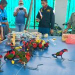 Smuggled Parrots Stuffed in Plastic Bottles