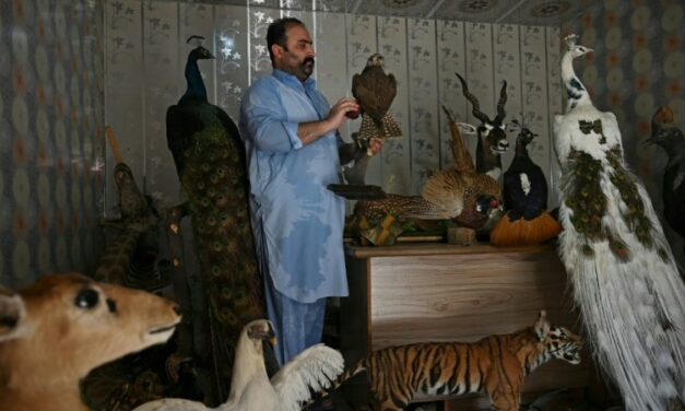Stuffed with Love: Bereaved Pet Owners Turn to Taxidermy in Pakistan