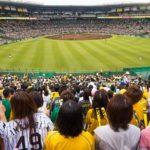 Japan's Ever-Growing Love Affair With Baseball