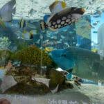 Japan Aquarium Seeks for Video Chats with Eels