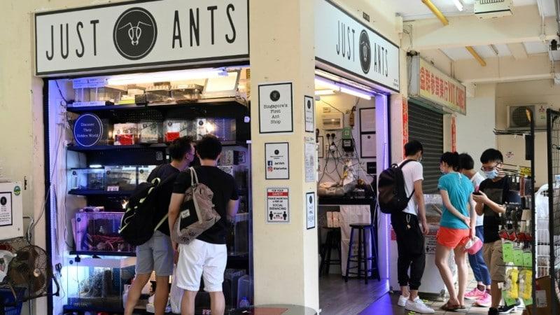 Just Ants Pet Shop