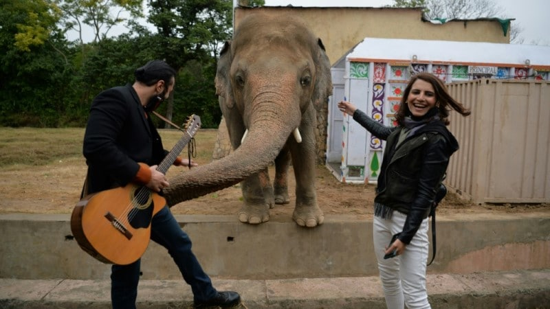 Kaavan Serenaded with Music