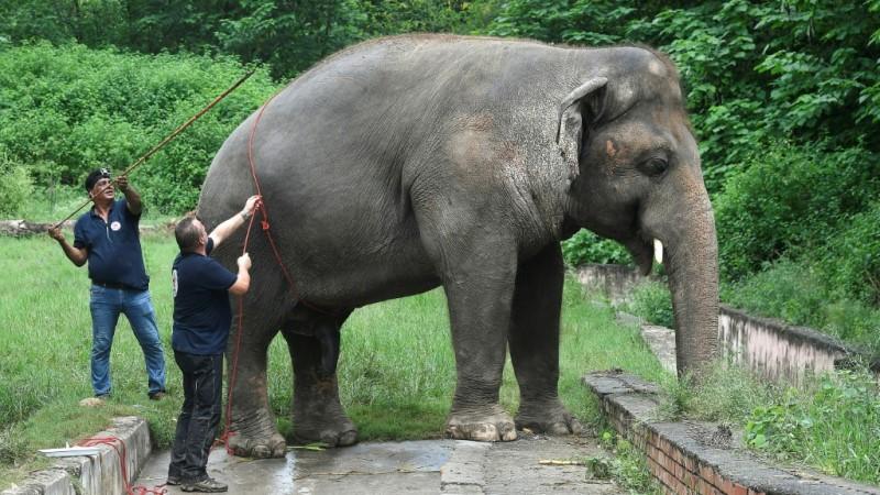 Kaavan World's Loneliest Elephant