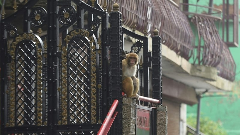 Keeping Out the Invading Monkeys