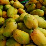 Kesar Mango: The Crown Jewel of all Mangoes