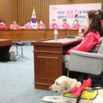 South Korea's Parliament Plans to Allow Guide Dogs after a 16 Years Ban