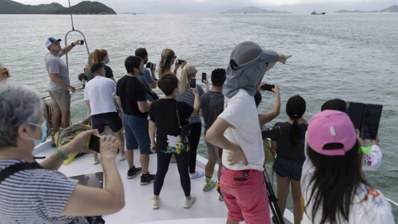 Lack of Ferries Welcome for Dolphins