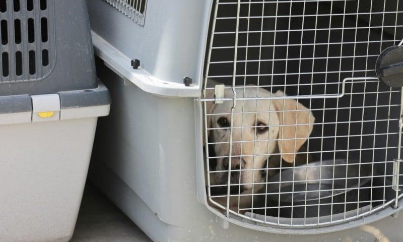Left Behind Dog in Afghanistan