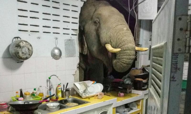 Mammoth Visitor