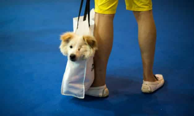 Owners Turn to Social Media to Feed Stranded Pets After Wuhan Lockdown
