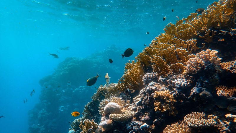 Marine Life ©Francesco Ungaro