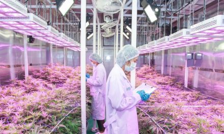 Medical Marijuana To Be Made Available in Thailand
