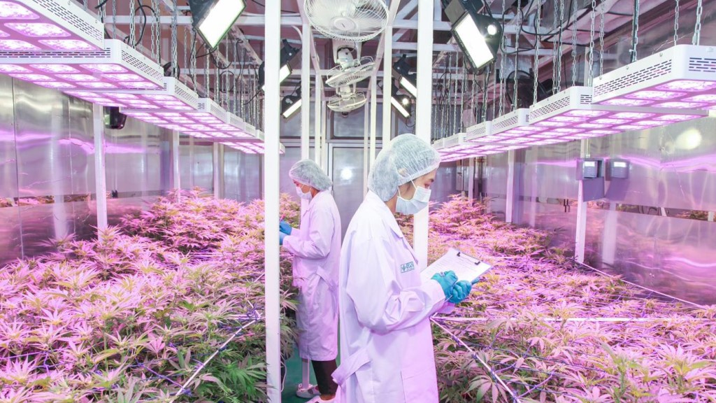 Medical Marijuana - Thailand GPO 0
