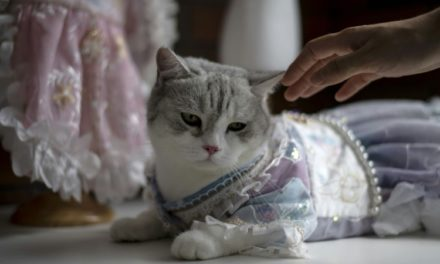 The Real Catwalk: Pet Couture Inspired by Ancient Chinese Clothing