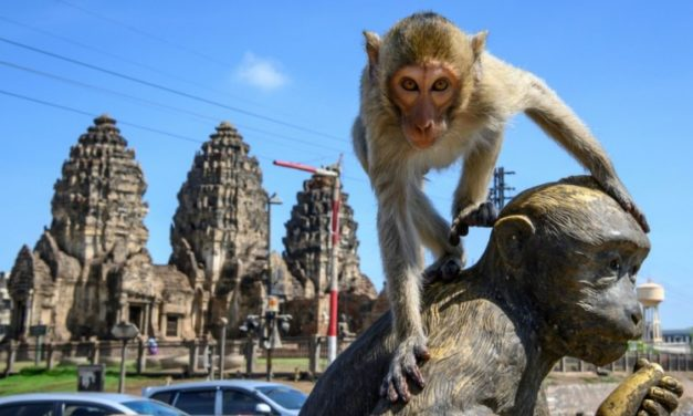 Humans Try to Take Back Thai City from Fearless Monkeys
