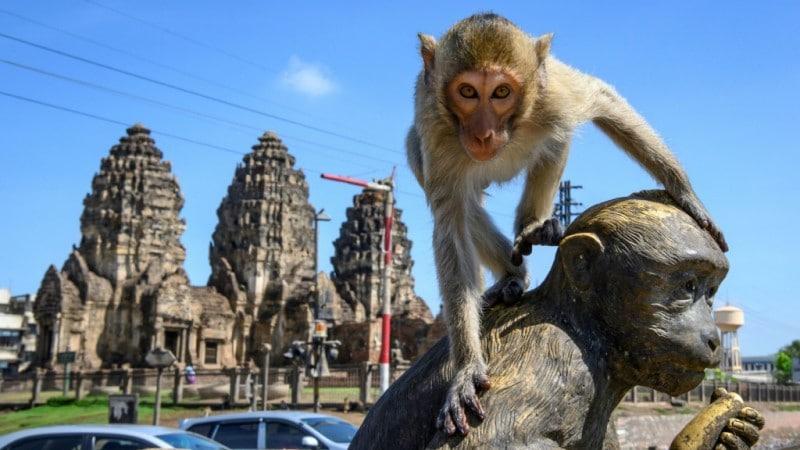 Monkeys in the Thai City of Lopburi.afp
