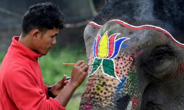 Nepal Elephant Festival: Judge for Beauty and Inspect for Signs of Abuse