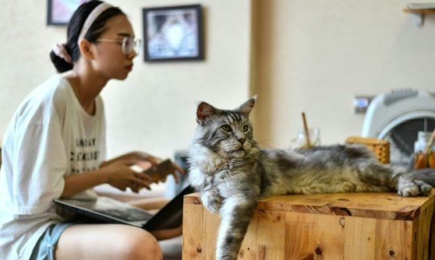 Vietnam Cat Cafe Offers Purr-Fect Pick-me-up for Rescued Felines