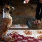 Indian Street Dog's Rocky Road to Recovery after Train Accident