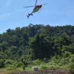 Ape Escape: Indonesian Orangutans Airlifted Back to the Wild