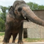 Cher Shares Joy as Pakistan Agreed to Release Lonely Elephant Kaavan