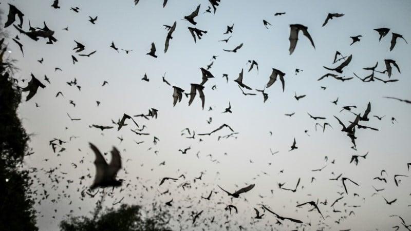 Pandemic Virus Exist in Nature