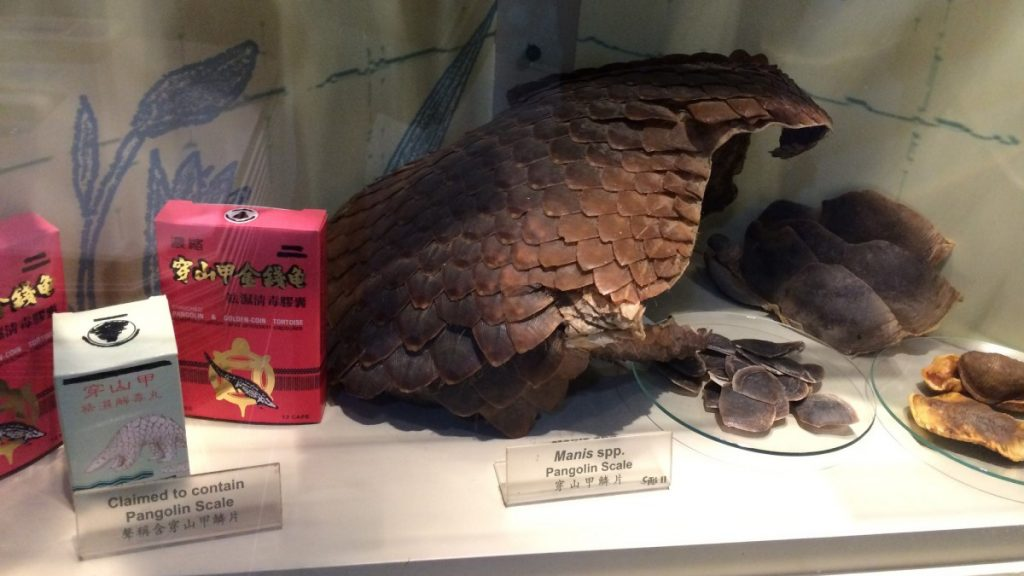 Pangolins.US Government Accountability Office