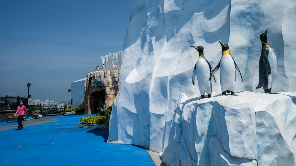 Penguins at Hong Kong's Ocean Park.afp